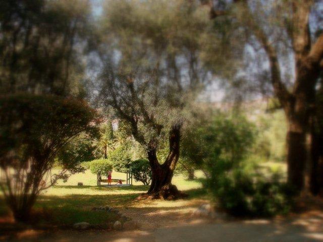 SPECIAL ART DONATION TO THE RAMBAM HOSPITAL IN HAIFA, ISRAEL